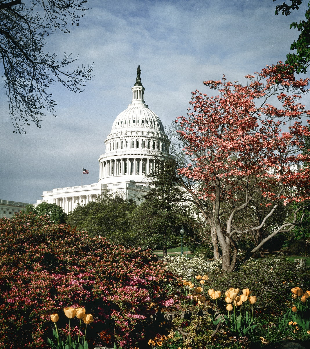 Capitol Hill, Washington D.C.Original image from Carol M. Highsmith's America, Library of Congress collection.…