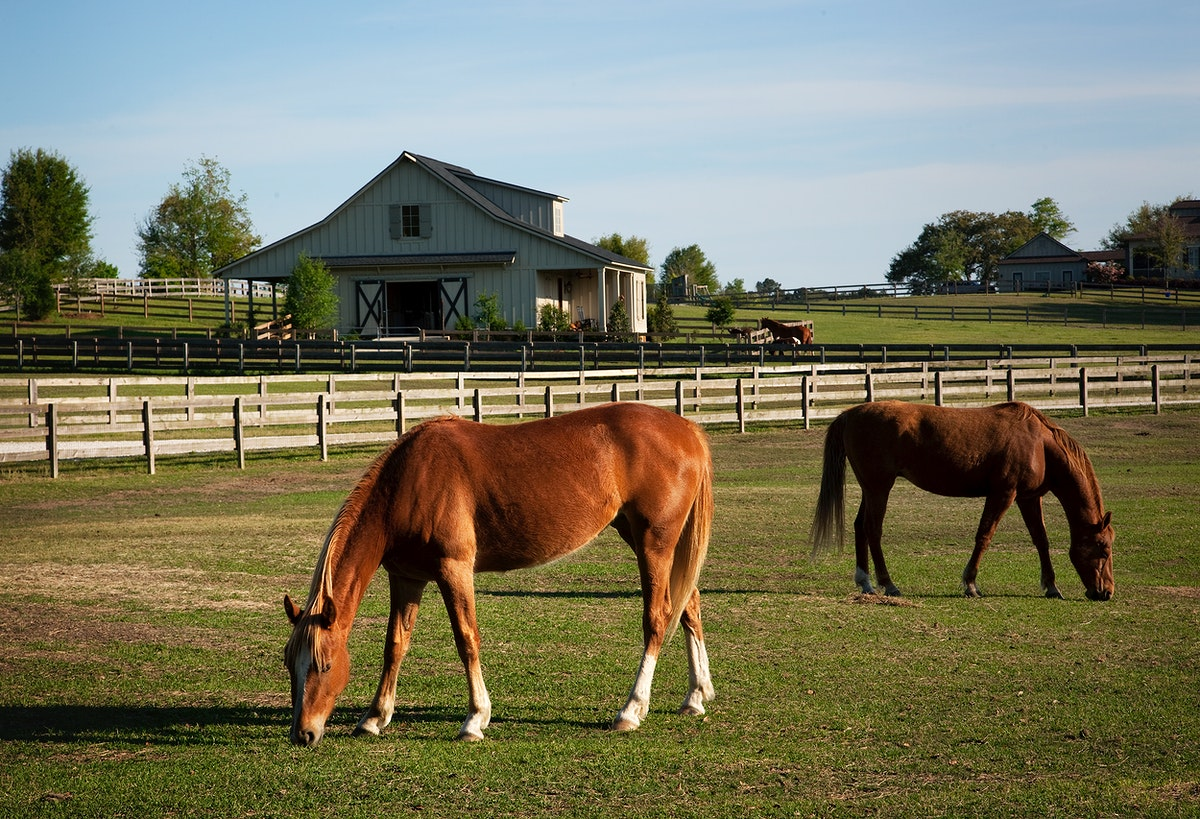 Horses at a ranch in rural Alabama. Original image from Carol M. Highsmith's America, Library of Congress collection.…