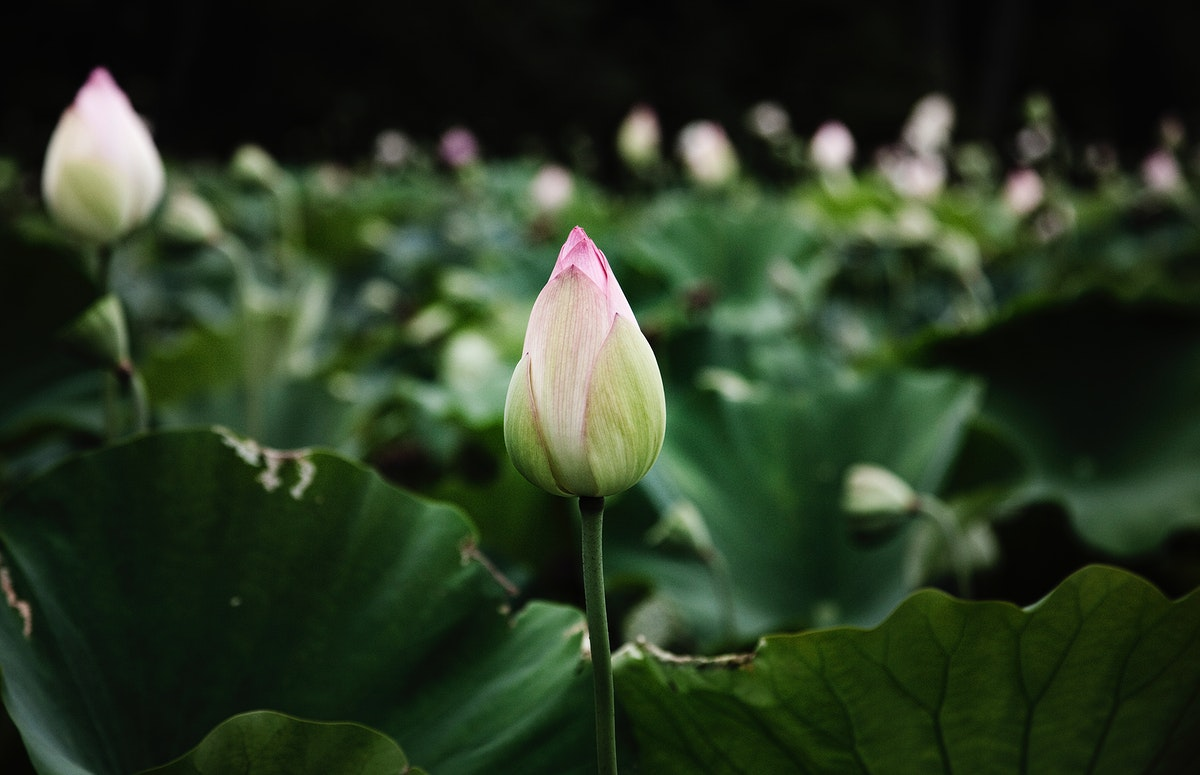 Kenilworth Park and Aquatic Gardens is also known as Anacostia Park. Original image from Carol M. Highsmith's America…