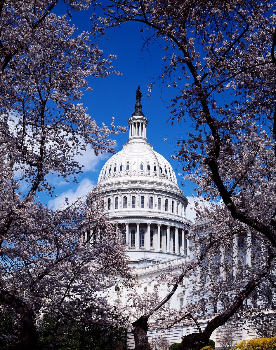 Capitol Hill during the cherry blossom season. Original image from Carol M. Highsmith's America, Library of Congress…