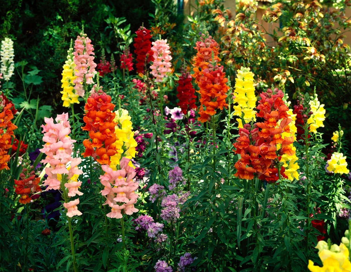 Flowers at the Desert Botanical Garden. Original image from Carol M. Highsmith's America, Library of Congress…