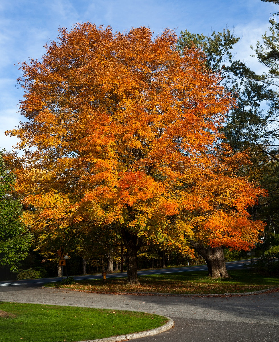 Fall trees in Connecticut. Original image from Carol M. Highsmith's America, Library of Congress collection. Digitally…