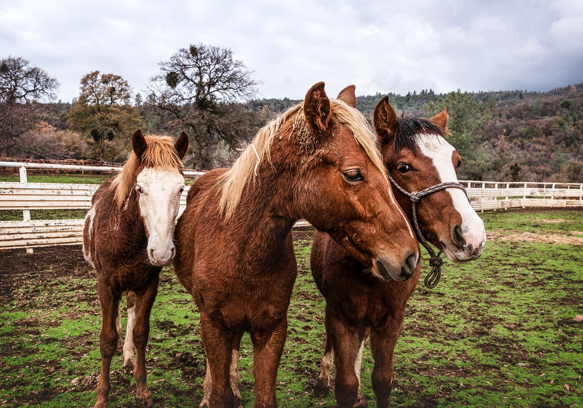 Yearlings on a ranch in Red River County near Detroit, Texas. Original image from Carol M. Highsmith's America, Library…