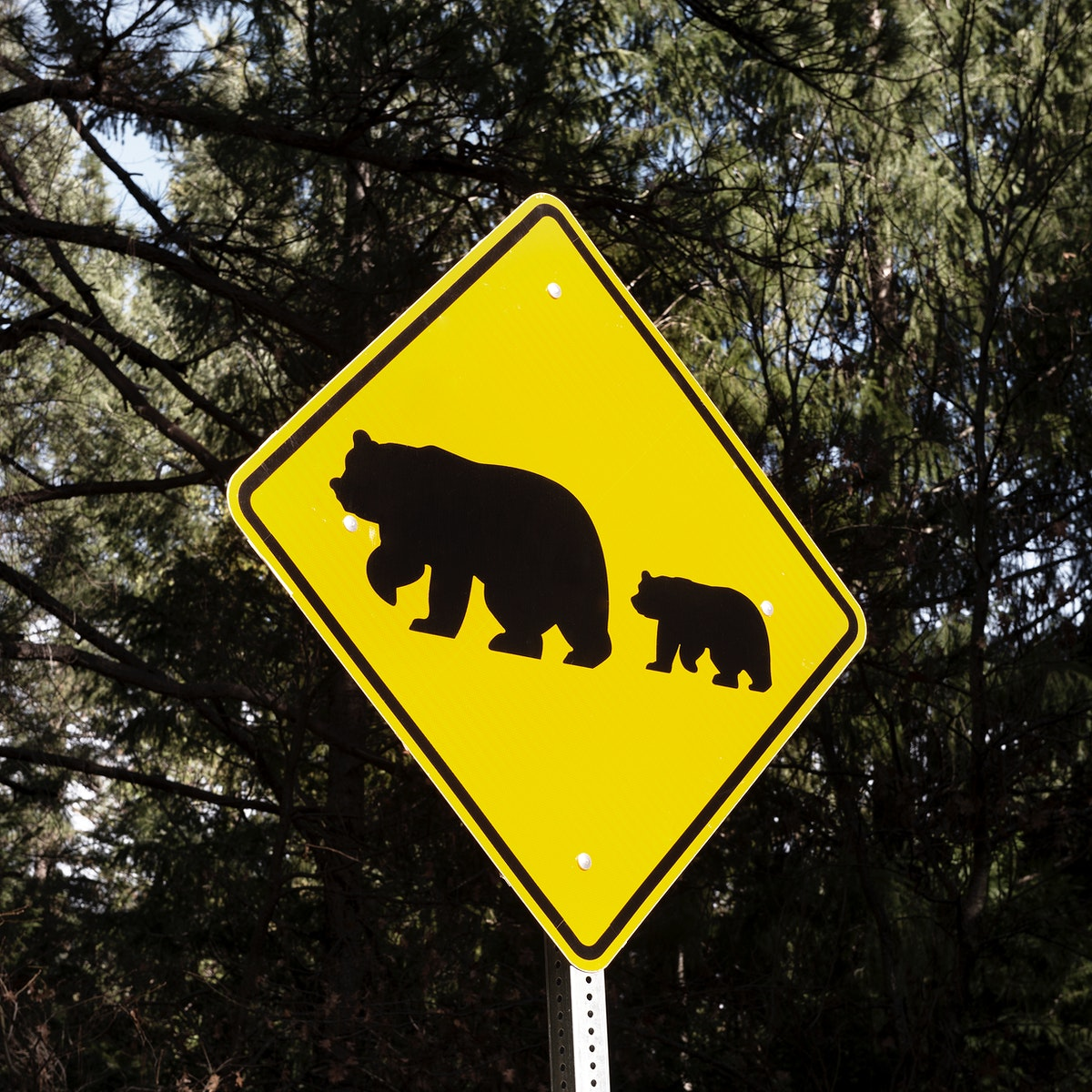 One of what are fairly common bear-crossing signs in California's Sierra Mountains. Original image from Carol M.…