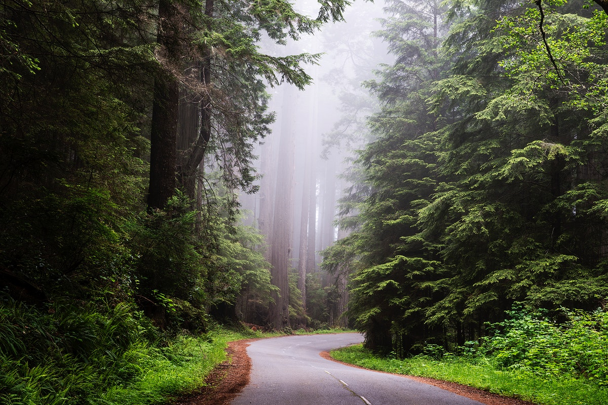 Redwood National and State Park on U.S. 101 in Northern California. Original image from Carol M. Highsmith's America…