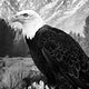 """A young bald eagle surveys the world below in the vast Wyoming portion of Yellowstone National Park. Original image from <a href=""""https://www.rawpixel.com/search/carol%20m.%20highsmith?sort=curated&amp;page=1"""">Carol M. Highsmith</a>&rsquo;s America, Library of Congress collection. Digitally enhanced by rawpixel."""
