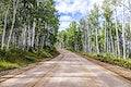 """Aspens in San Juan County, Colorado USA - Original image from <a href=""""https://www.rawpixel.com/search/carol%20m.%20highsmith?sort=curated&amp;page=1"""">Carol M. Highsmith</a>&rsquo;s America, Library of Congress collection. Digitally enhanced by rawpixel"""