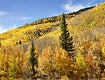 """Fall aspens in San Juan County, Colorado USA - Original image from <a href=""""https://www.rawpixel.com/search/carol%20m.%20highsmith?sort=curated&amp;page=1"""">Carol M. Highsmith</a>&rsquo;s America, Library of Congress collection. Digitally enhanced by rawpixel"""
