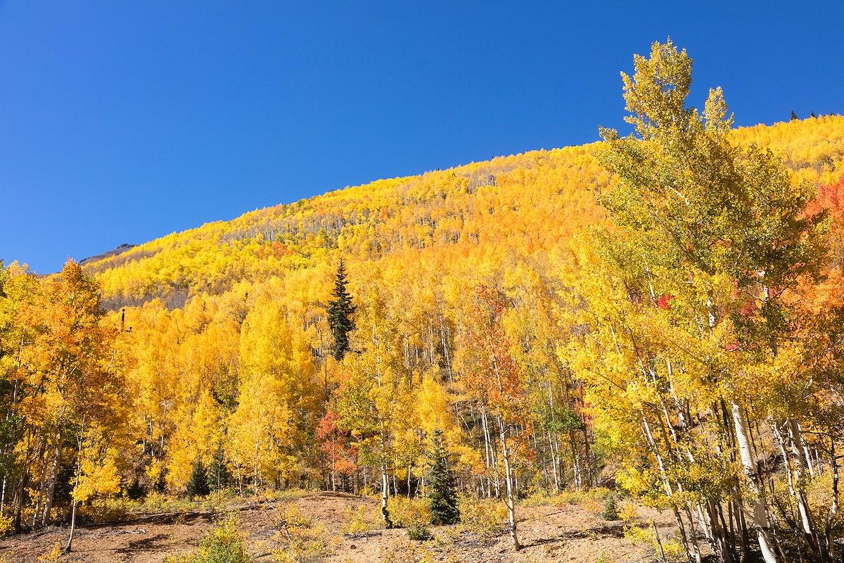 Fall aspens in San Juan County, Colorado USA - Original image from Carol M. Highsmith's America, Library of Congress…