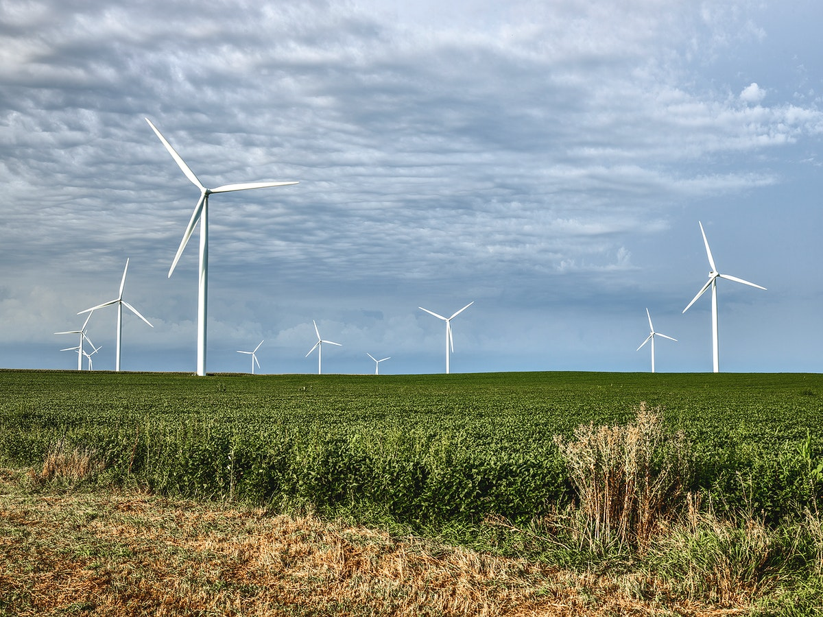 Wind turbines dominate the sky over the soybean fields of Franklin County, Iowa. Original image from Carol M.…