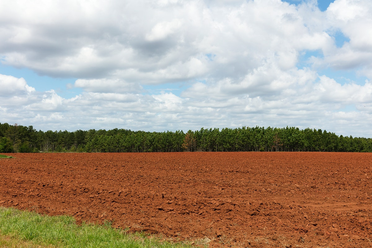 Field in Plains, Georgia. Original image from Carol M. Highsmith's America, Library of Congress collection. Digitally…