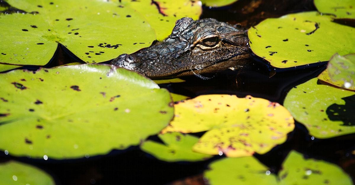 The Okefenokee Swamp Park in Waycross, Georgia. Original image from Carol M. Highsmith's America, Library of Congress…