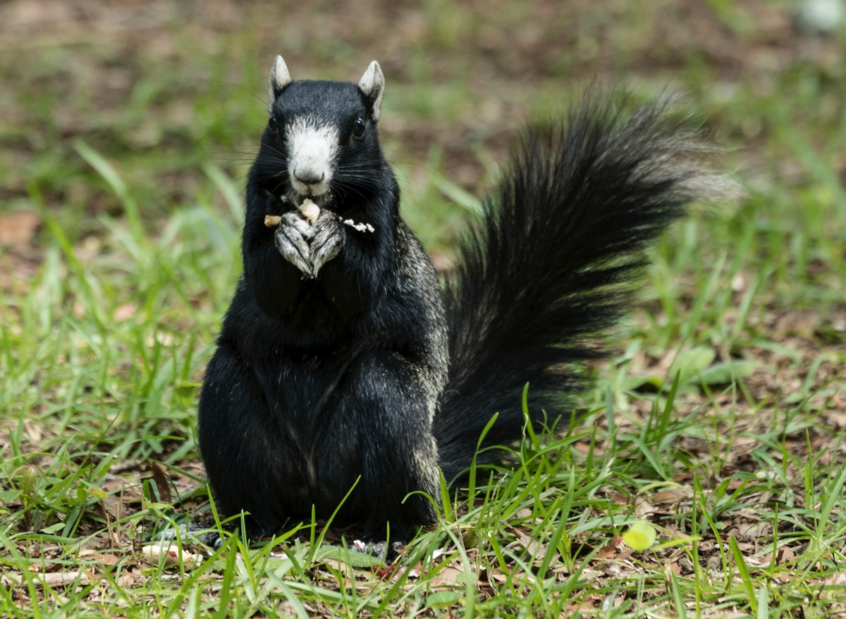A squirrel at the Lowcountry Trail. Original image from Carol M. Highsmith's America, Library of Congress collection.…