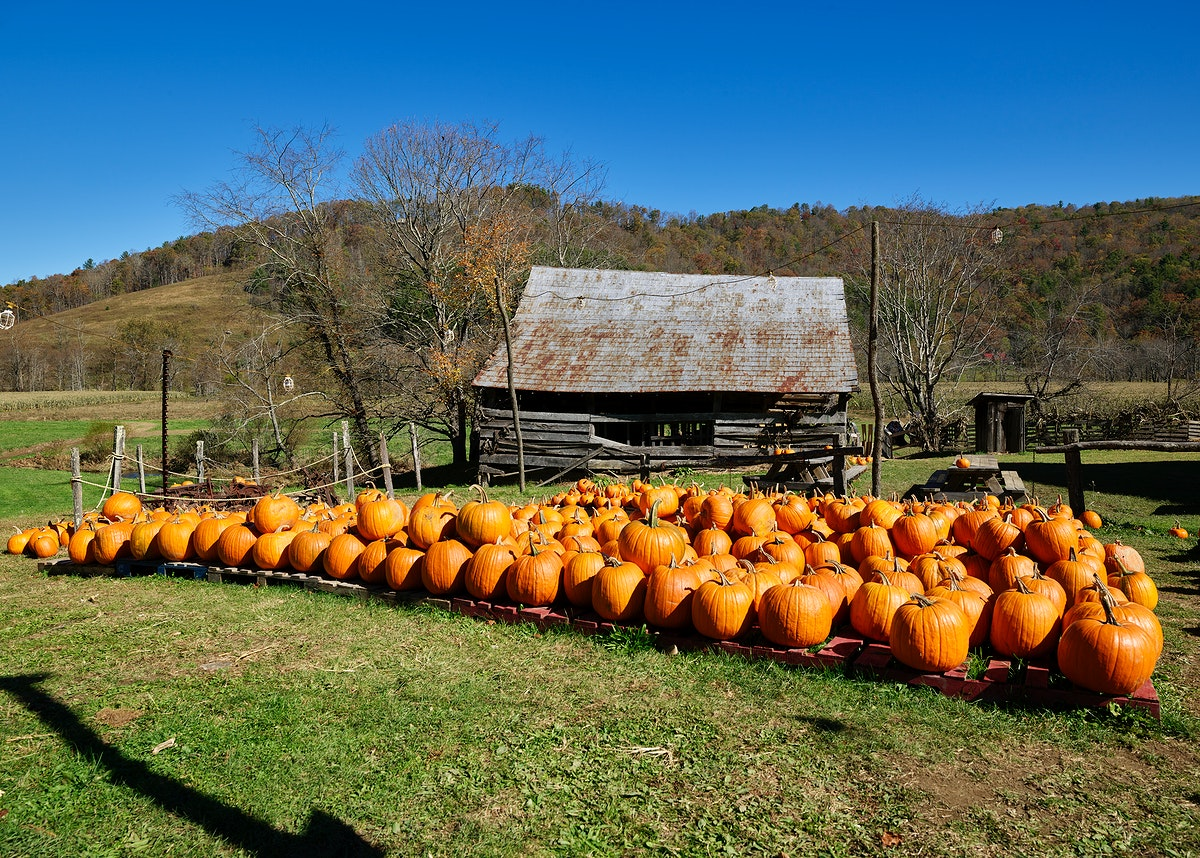 Rustic cabin associated with the nearby Mast Farm Inn, and decorated with pumpkins for the fall season, in Valle Crucis…
