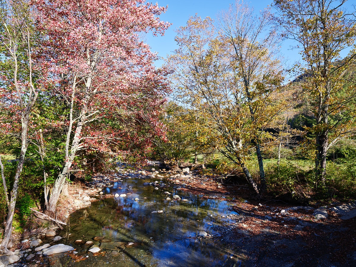 Autumn along the Robbins Branch creek, a tributary of the White River near Ripton, Vermont. Original image from Carol M.…