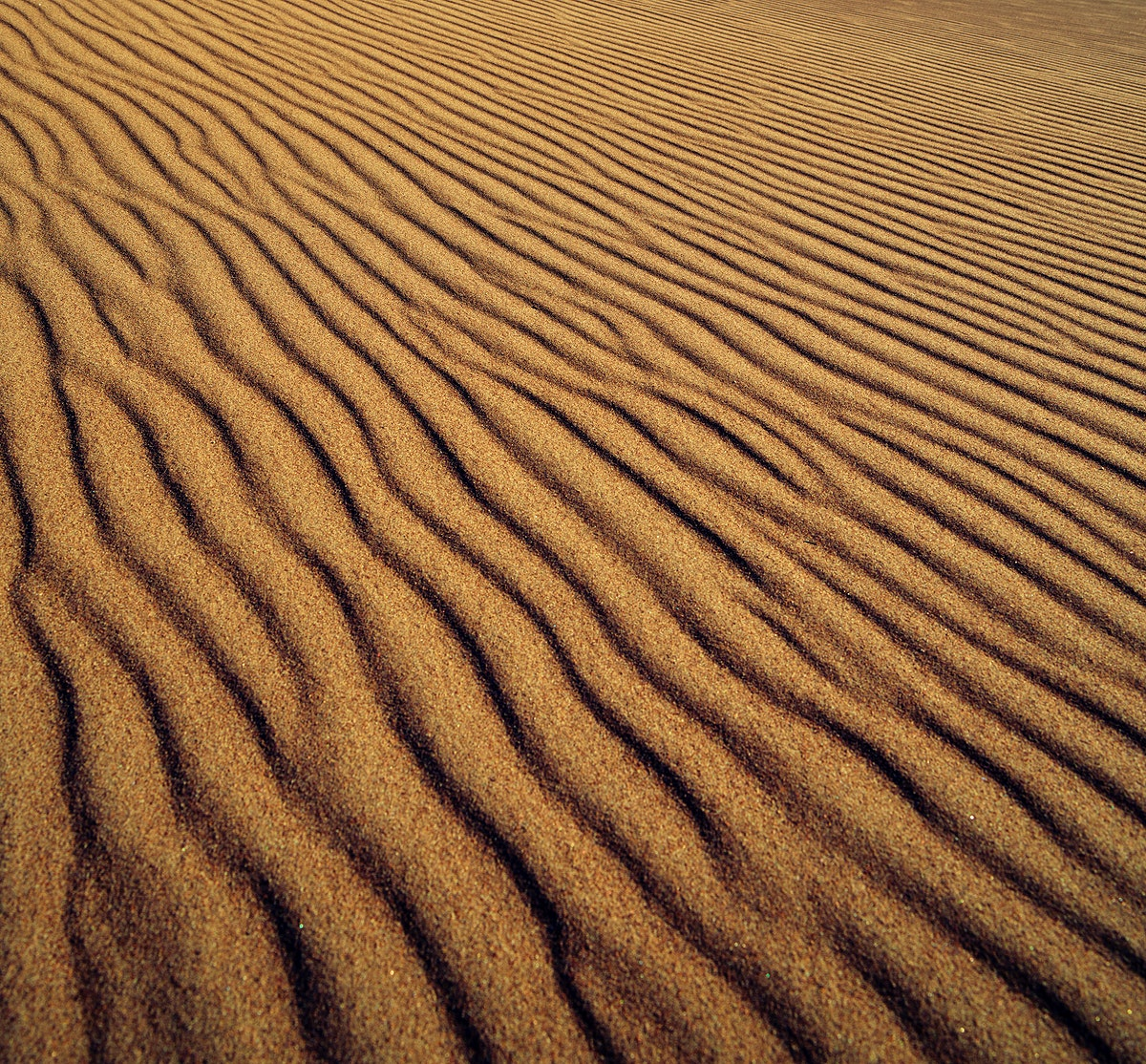 View from right on top of the tallest dune in North America at Great Sand Dunes National Park and Preserve, in the San Luis…