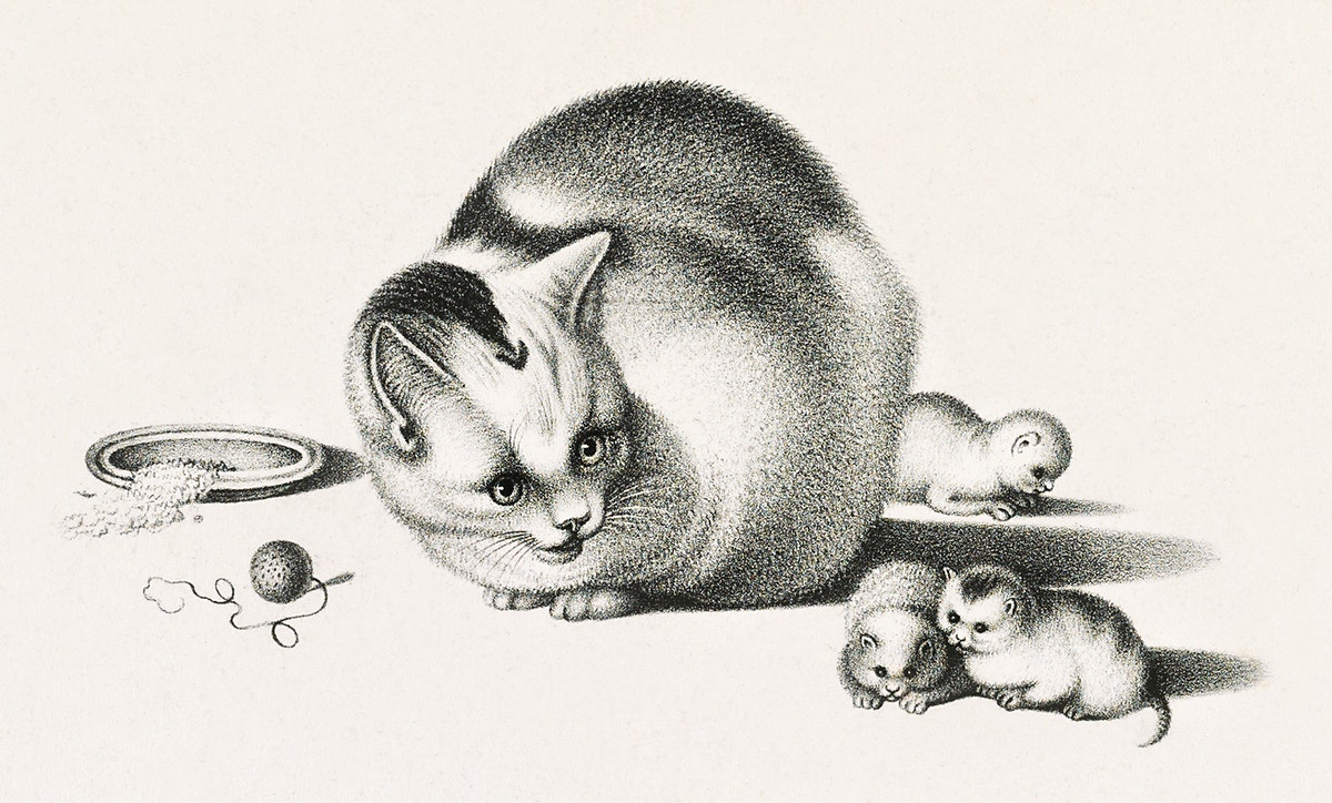 Illustration of domestic cat and three newborn kittens by Gottfried Mind (1768-1814). Original from Library of Congress.…