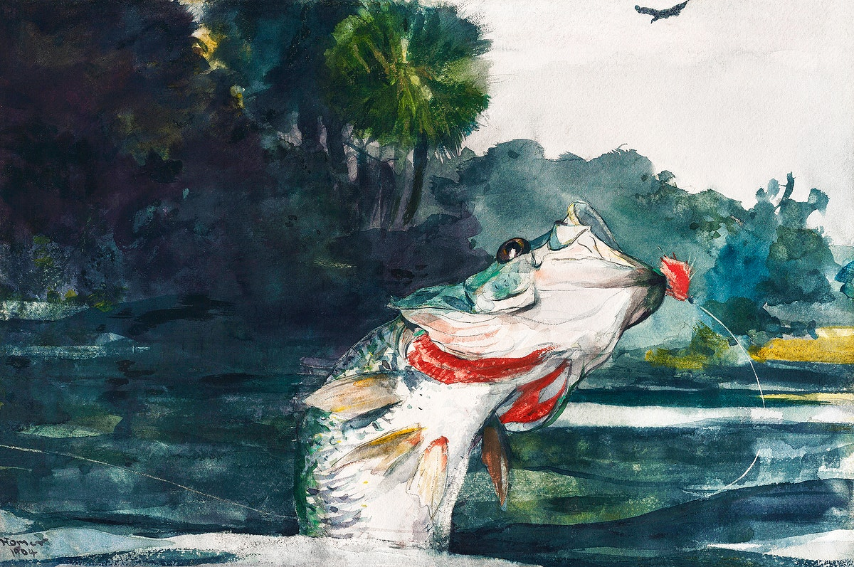 Life-Size Black Bass (1904) by Winslow Homer. Original from The Smithsonian Institution. Digitally enhanced by rawpixel.