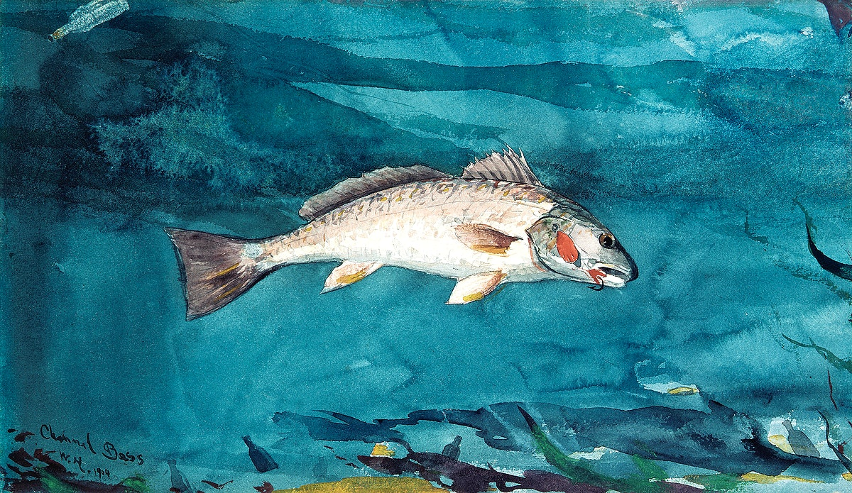 Channel Bass (1904) by Winslow Homer. Original from The MET museum. Digitally enhanced by rawpixel.