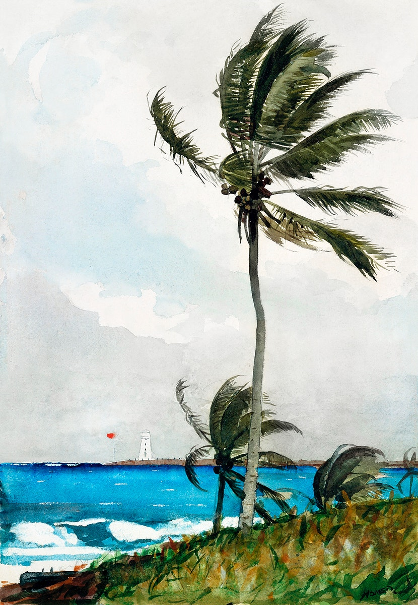 Palm Tree, Nassau (1898) by Winslow Homer. Original from The MET museum. Digitally enhanced by rawpixel.