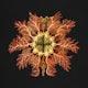 Colorful vintage tunicate marine life illustration