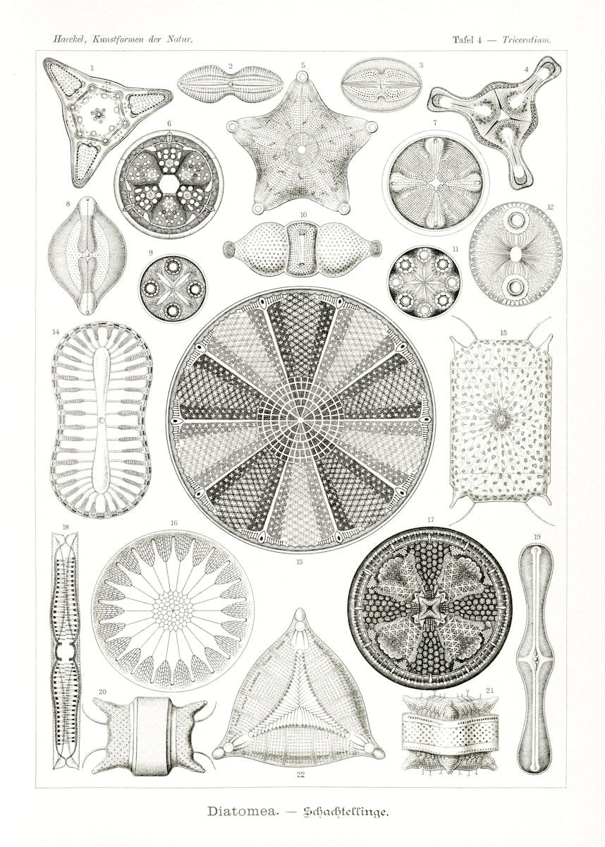 Diatomea–Schachtellinge from Kunstformen der Natur (1904) by Ernst Haeckel. Original from Library of Congress.…