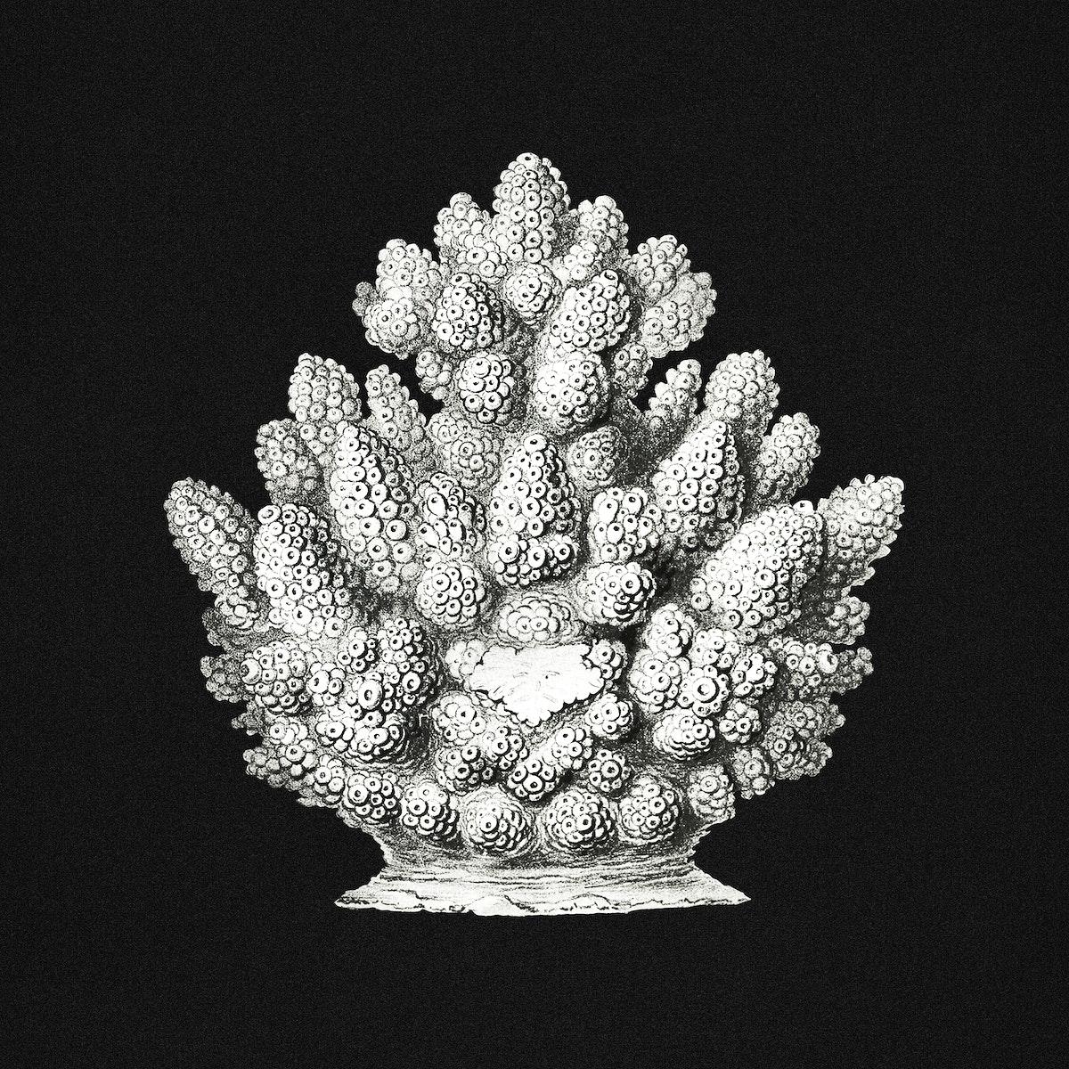 Vintage coral marine life illustration