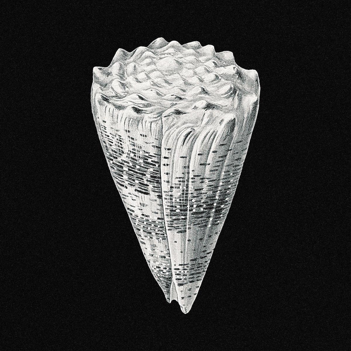 Vintage shell marine life illustration