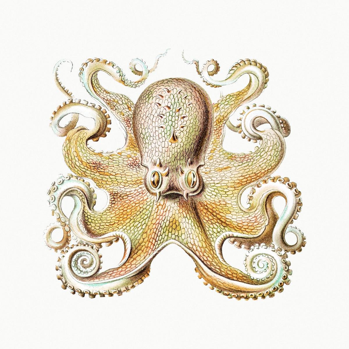 Vintage octopus marine life illustration