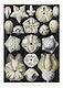 "Blasto&iuml;dea&ndash;Knospensterne from Kunstformen der Natur (1904) by <a href=""https://www.rawpixel.com/search/Ernst%20Haeckel?sort=curated&amp;mode=shop&amp;page=1"">Ernst Haeckel</a>. Original from Library of Congress. Digitally enhanced by rawpixel."