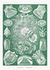 """Teleostei&ndash;Knochenfische from Kunstformen der Natur (1904) by <a href=""""https://www.rawpixel.com/search/Ernst%20Haeckel?sort=curated&amp;mode=shop&amp;page=1"""">Ernst Haeckel</a>. Original from Library of Congress. Digitally enhanced by rawpixel."""