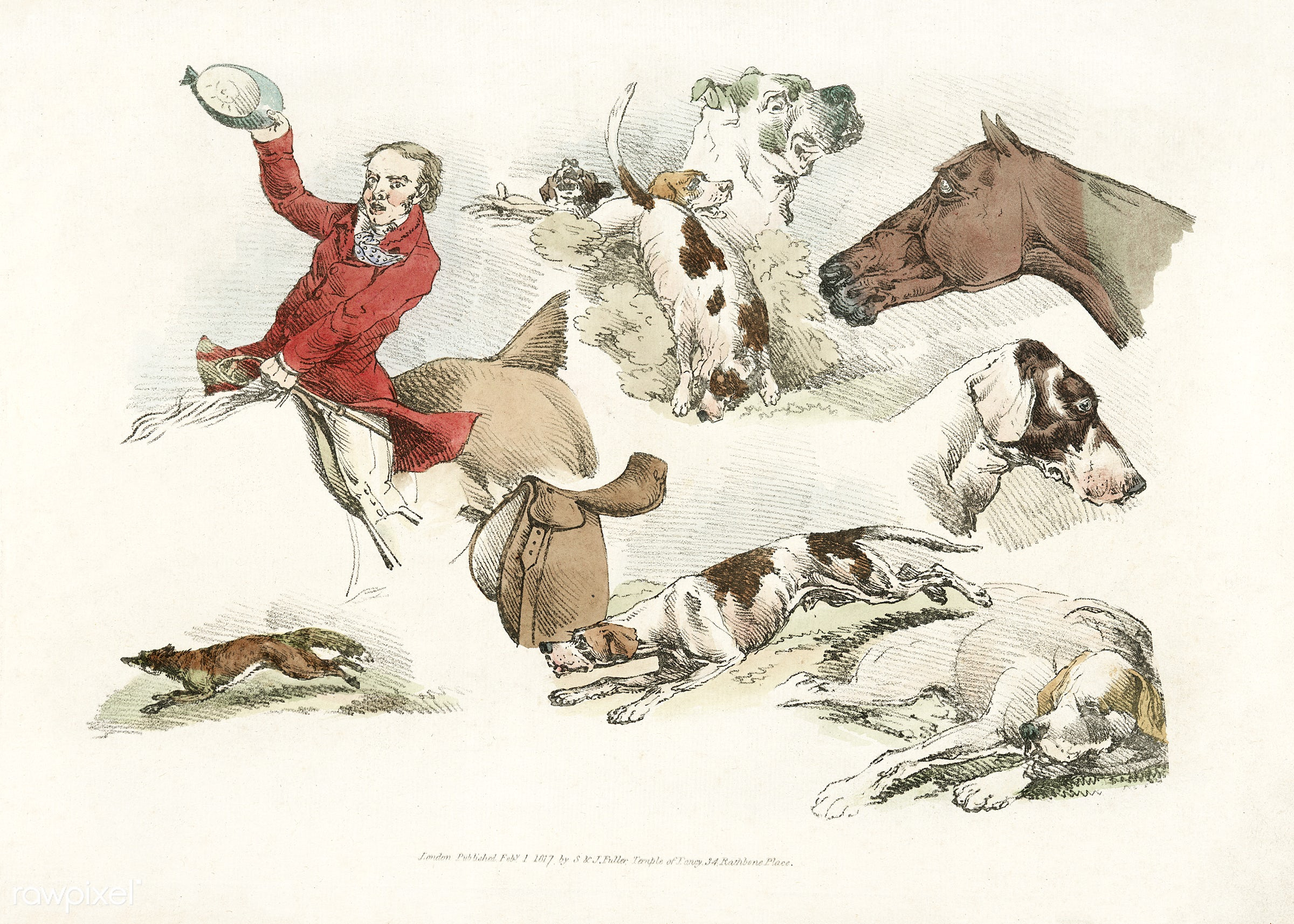 Vintage Illustration showing mounted hunter, running dogs and a fox from Sporting Sketches (1817-1818) by Henry Alken (1784-...
