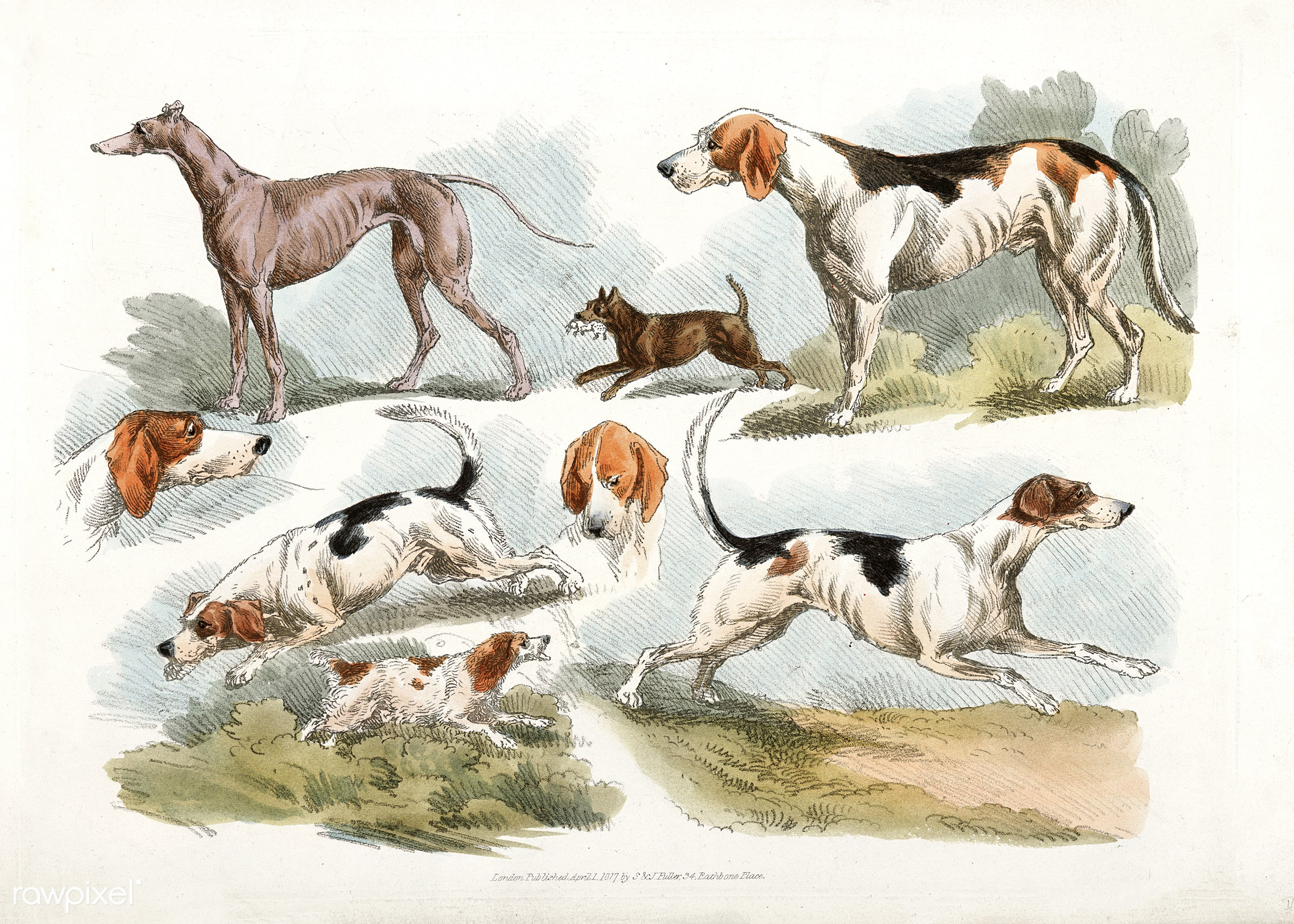 Illustration of hunting dogs from Sporting Sketches (1817-1818) by Henry Alken (1784-1851). - animal, antique, cc0, creative...