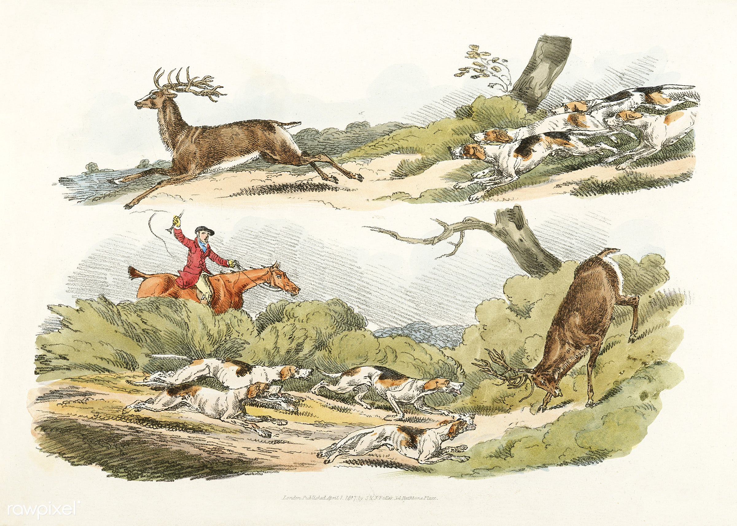 Illustration of a hunter with dogs chasing a stag from the vintage book Sporting Sketches (1817-1818) by Henry Alken (1784-...