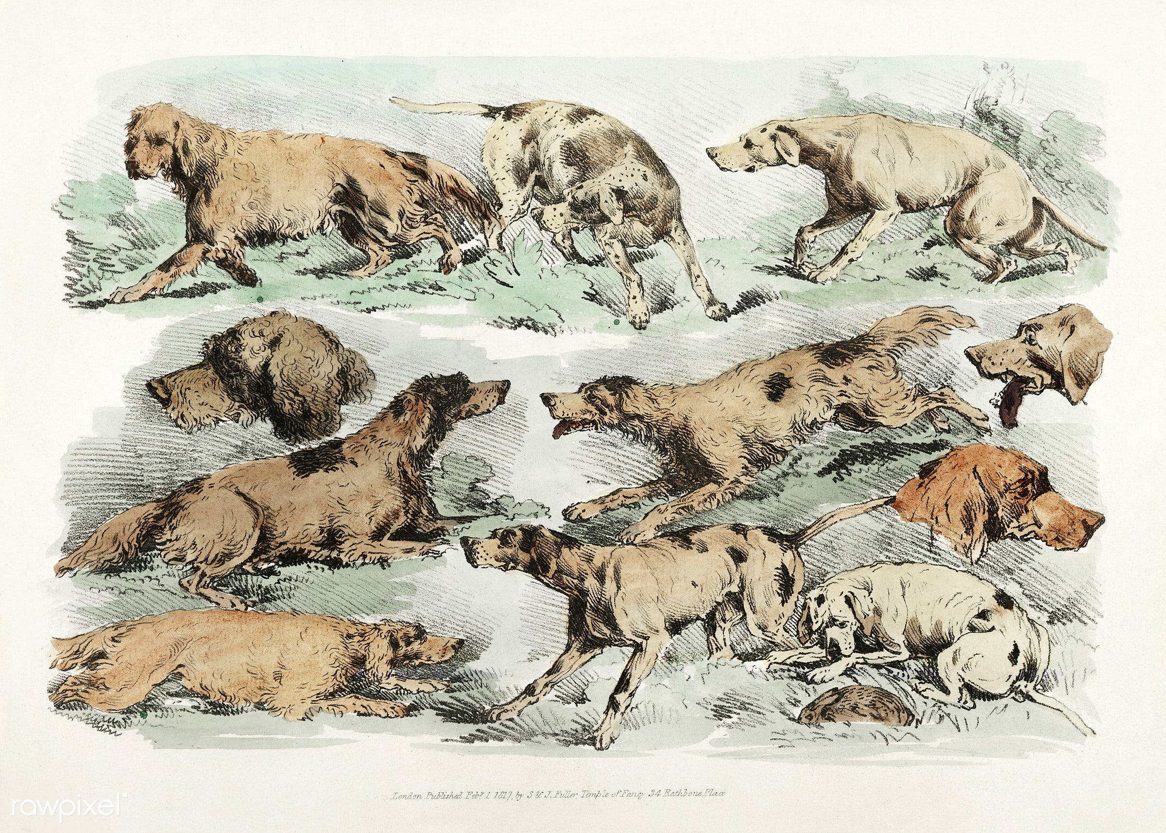 Illustration of hounds from Sporting Sketches (1817-1818) by Henry Alken (1784-1851). - animal, antique, cc0, creative...
