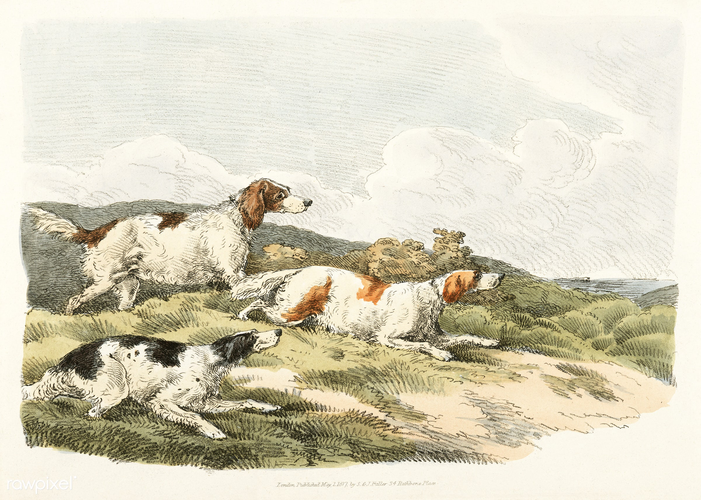 Illustration of running hounds from Sporting Sketches (1817-1818) by Henry Alken (1784-1851). - animal, antique, cc0,...