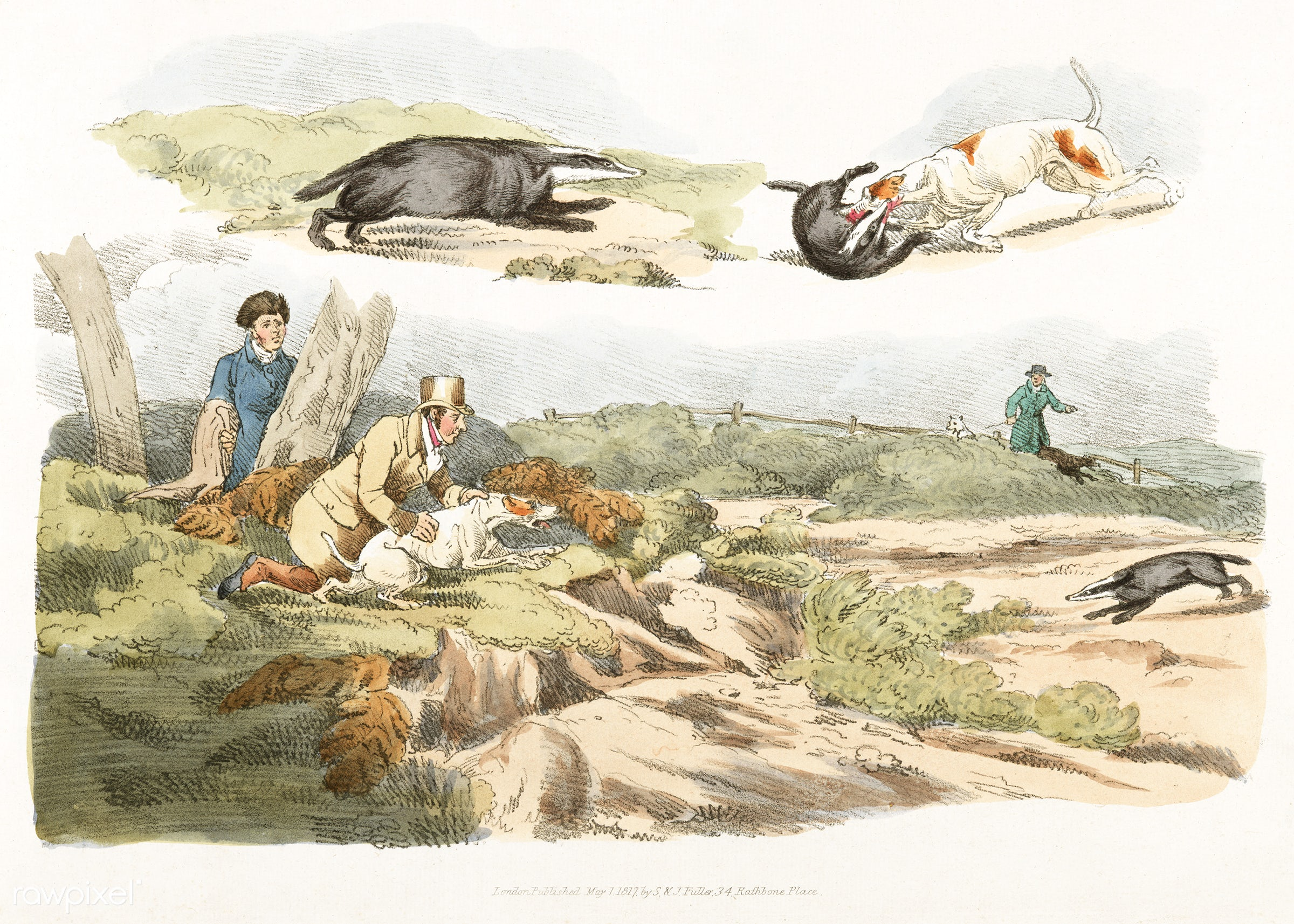 Illustration of badger hunting: dogs chasing and attacking badgers from Sporting Sketches (1817-1818) by Henry Alken (1784-...