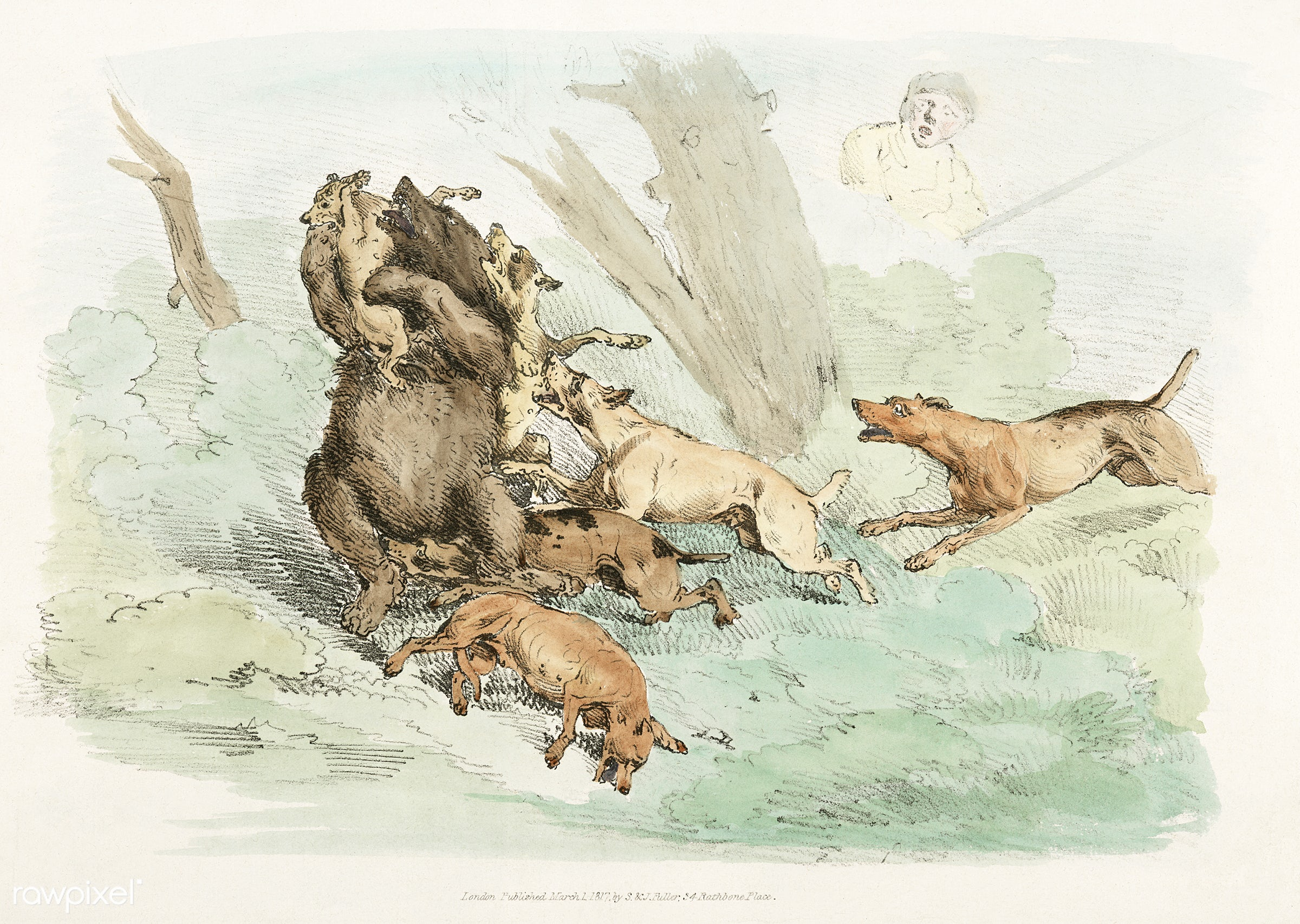Illustration of hunting dogs attacking a bear from Sporting Sketches (1817-1818) by Henry Alken (1784-1851). - animal,...