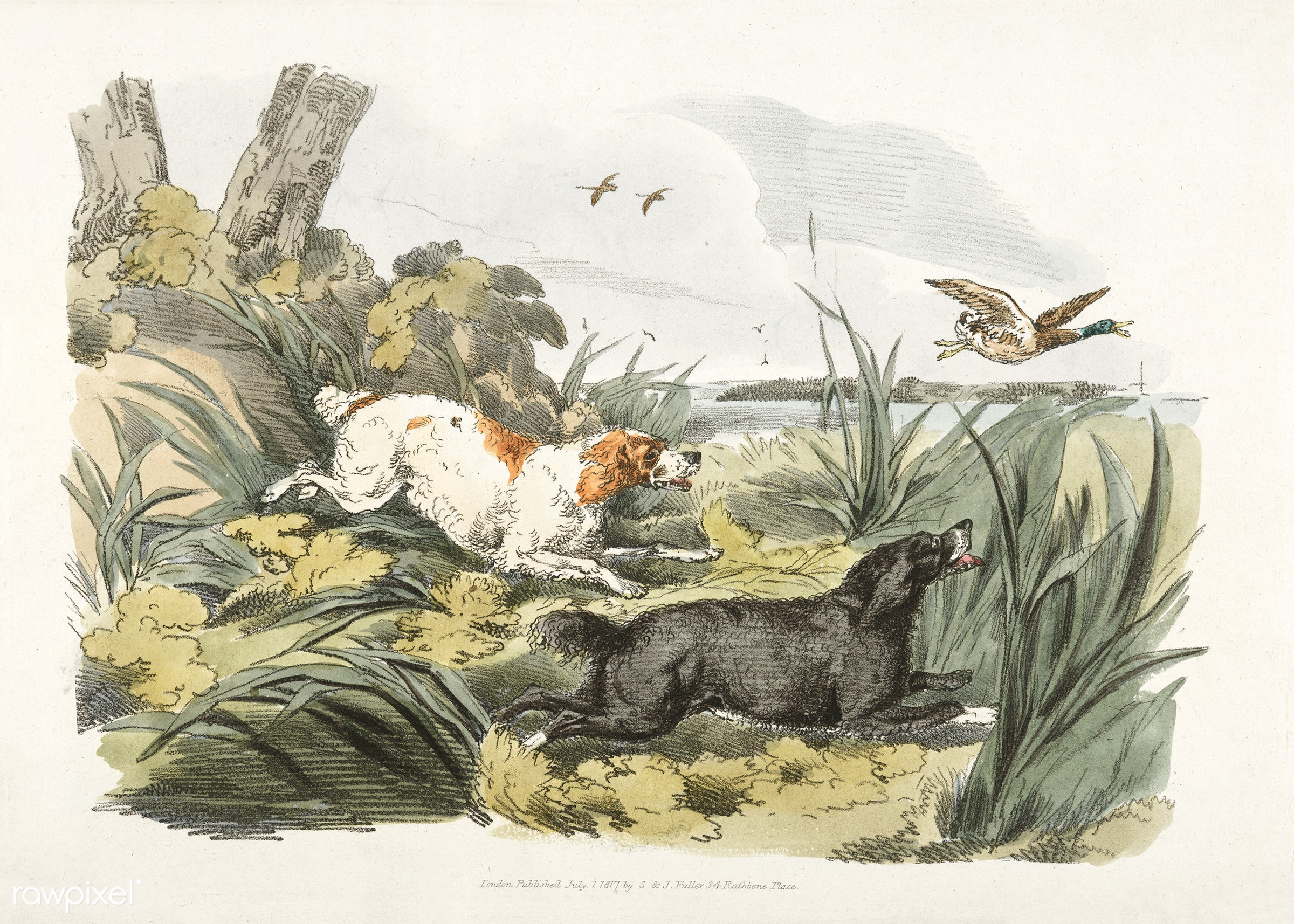Illustration of hounds on the hunt from Sporting Sketches (1817-1818) by Henry Alken (1784-1851). - animal, antique, bird,...