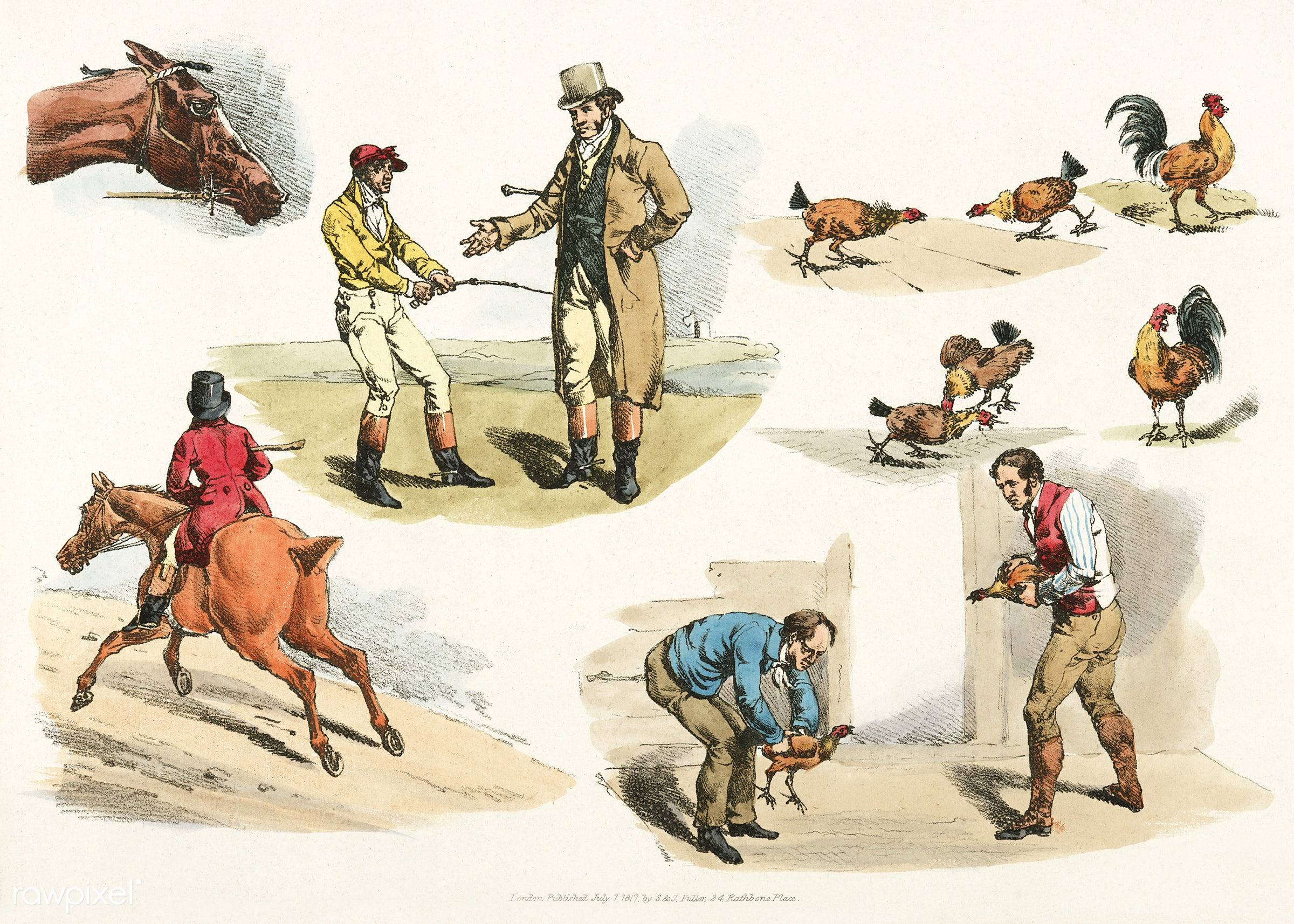 Illustration of gamecocks from Sporting Sketches (1817-1818) by Henry Alken (1784-1851). - animal, antique, cc0, chicken,...