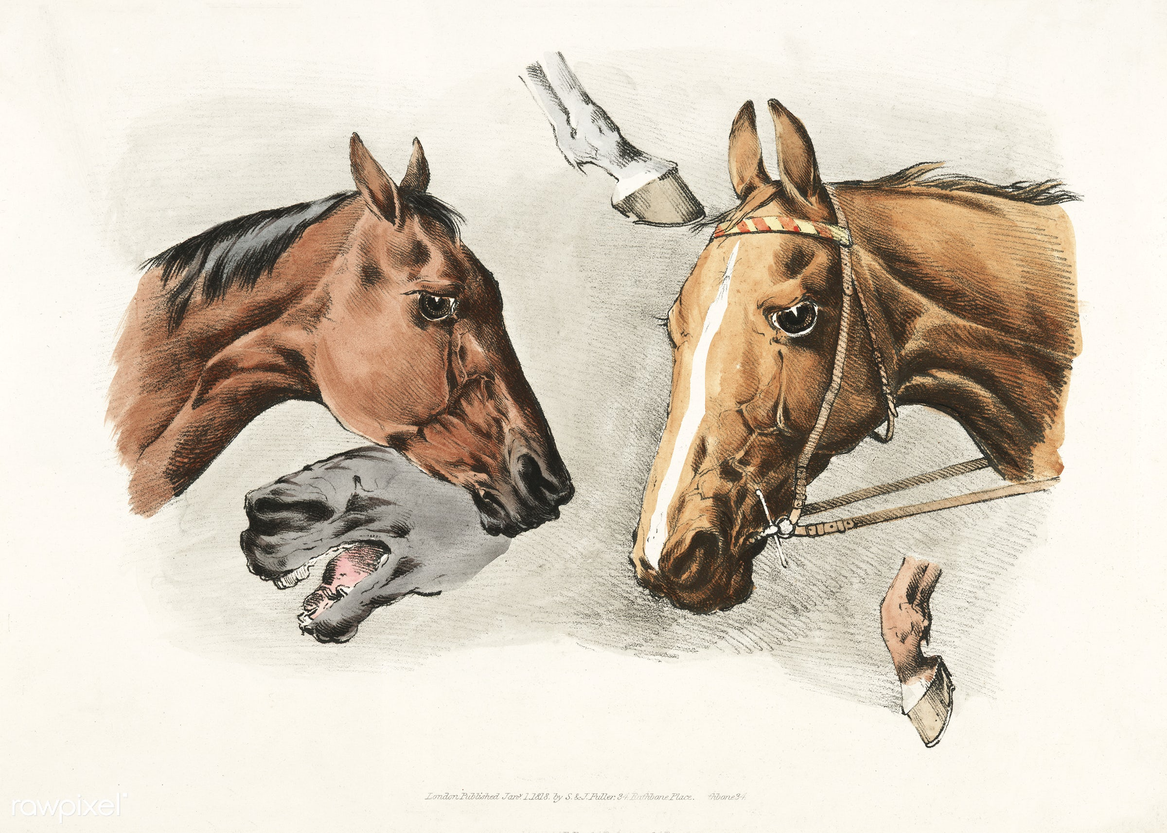 Illustration of horse heads and hoofs from Sporting Sketches (1817-1818) by Henry Alken (1784-1851). - animal, antique, cc0...