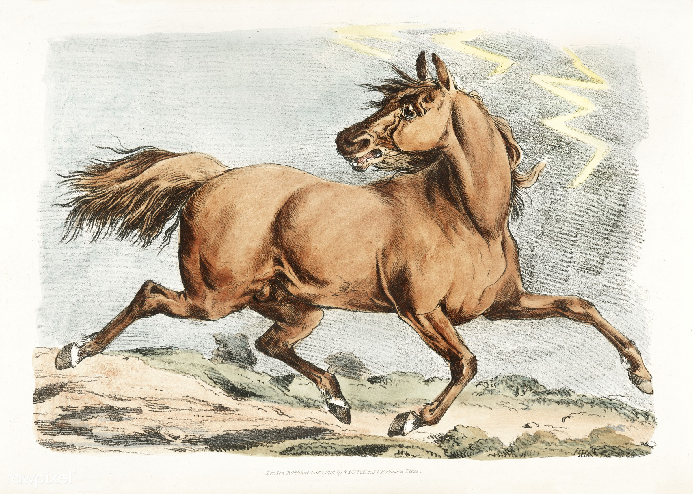 Illustration of a brown horse running from Sporting Sketches (1817-1818) by Henry Alken (1784-1851). - animal, antique,...