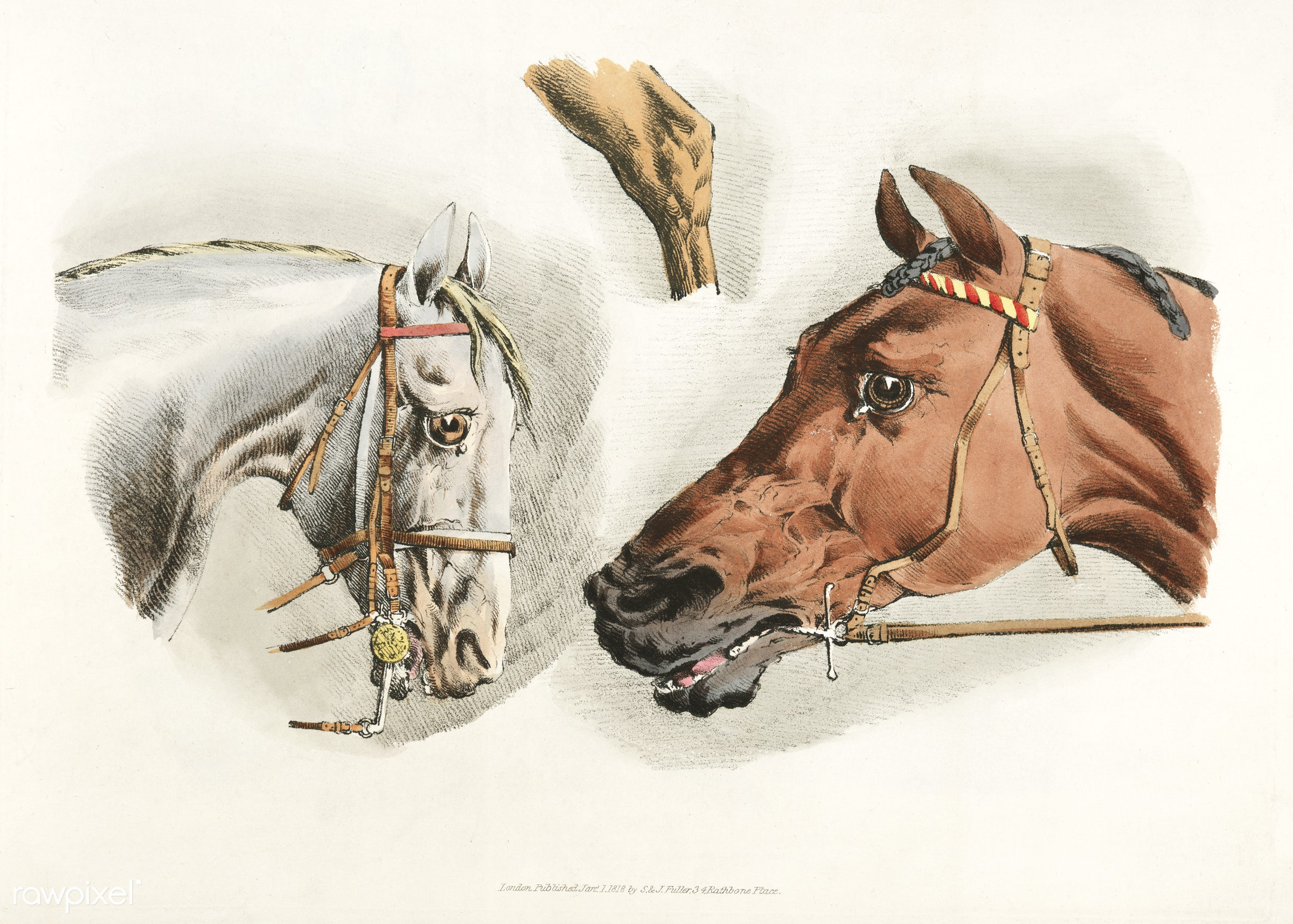 Illustration of heads of white and brown horses from Sporting Sketches (1817-1818) by Henry Alken (1784-1851). - animal,...