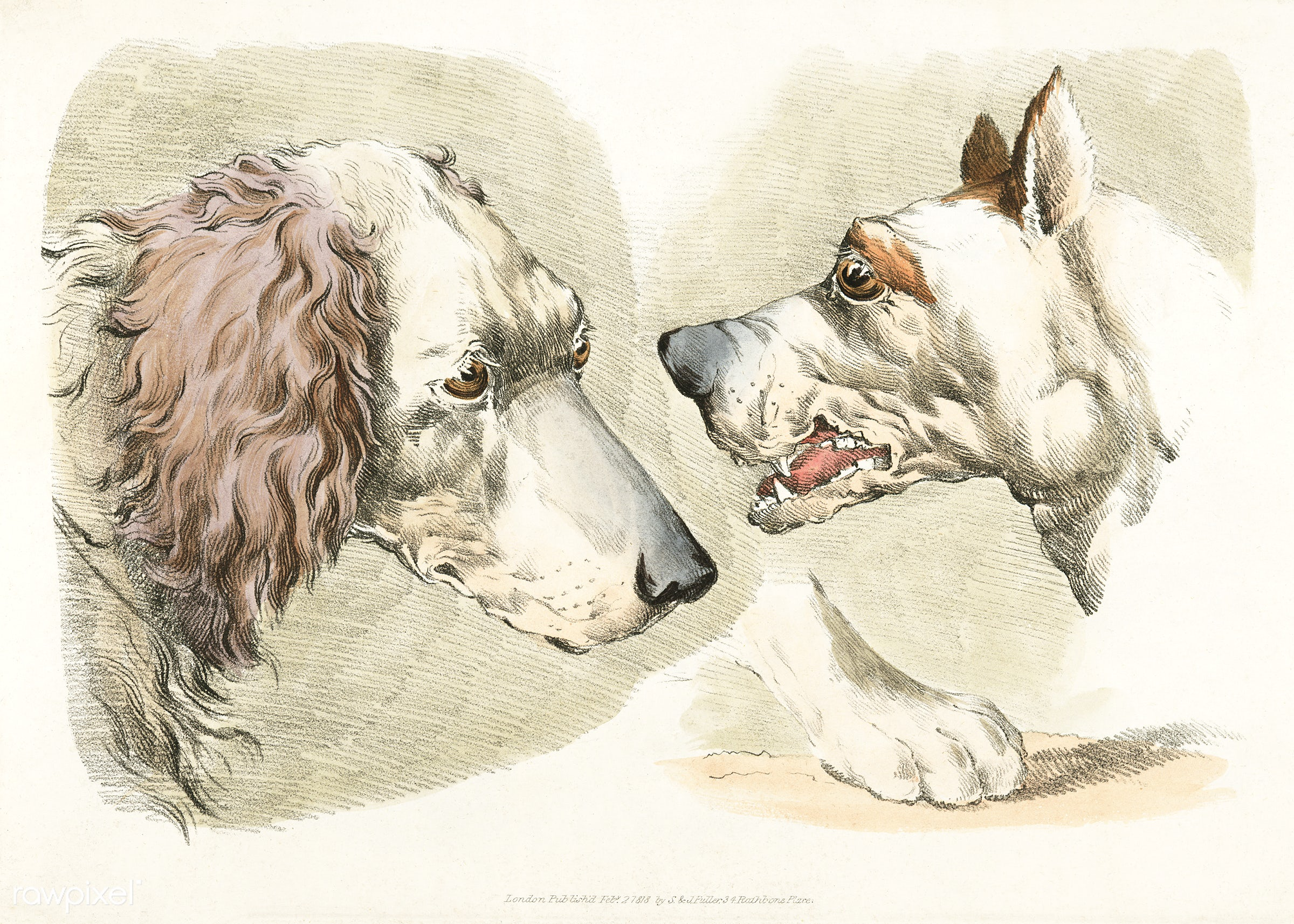 Illustration of two dog's heads and paw from Sporting Sketches (1817-1818) by Henry Alken (1784-1851). - animal, antique...