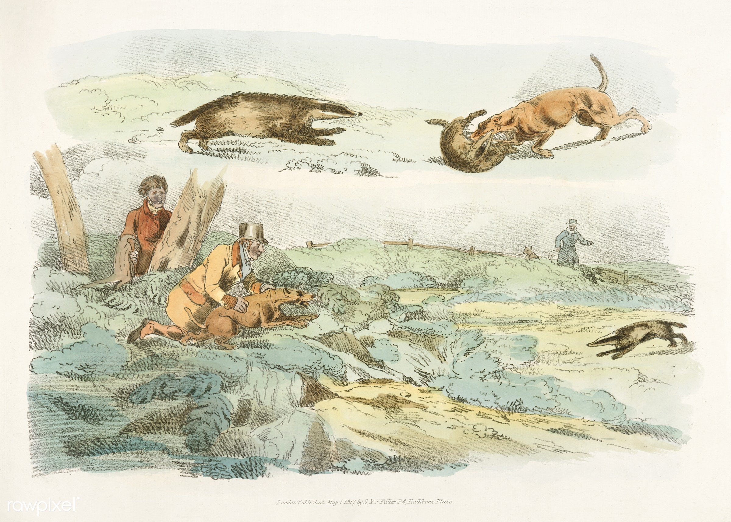 Illustration of badger hunting: dogs chasing and attacing badgers from Sporting Sketches (1817-1818) by Henry Alken (1784-...