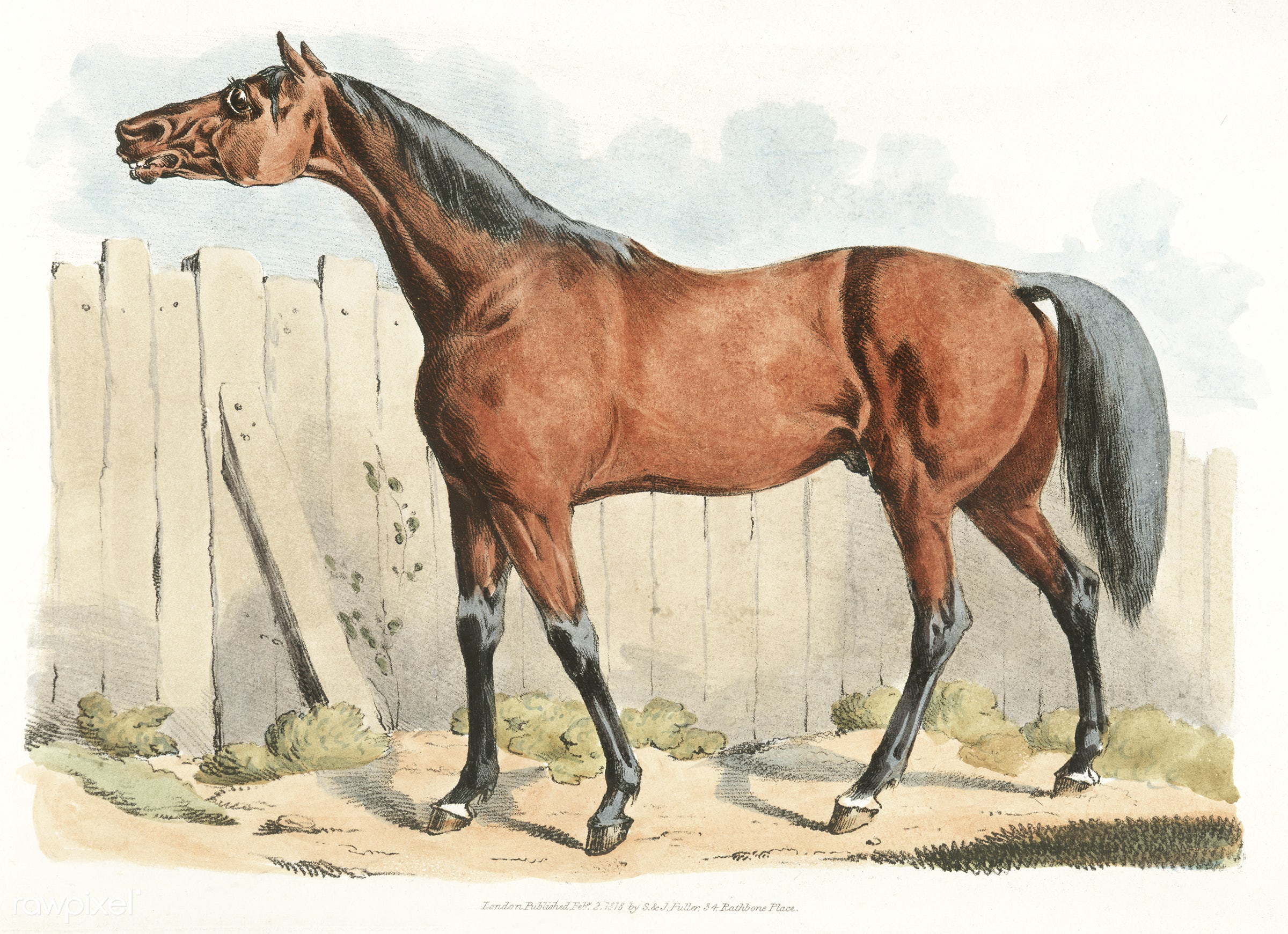 Illustration of dark-brown horse from Sporting Sketches (1817-1818) by Henry Alken (1784-1851). - animal, antique, cc0,...