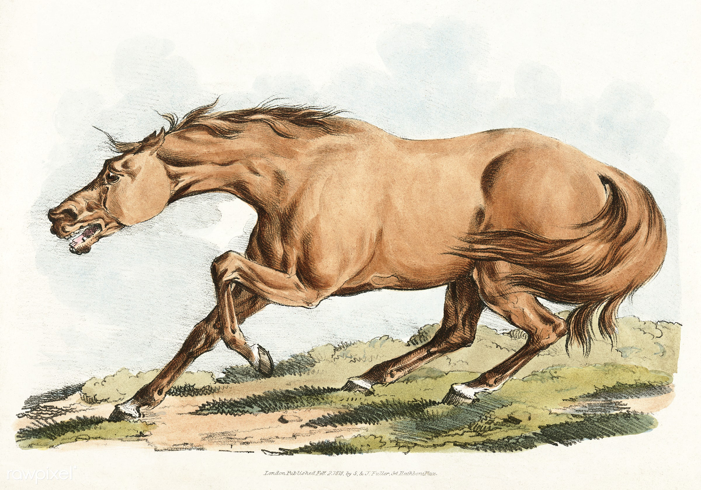 Illustration of light-brown horse from Sporting Sketches (1817-1818) by Henry Alken (1784-1851). - aggressive, angry, animal...