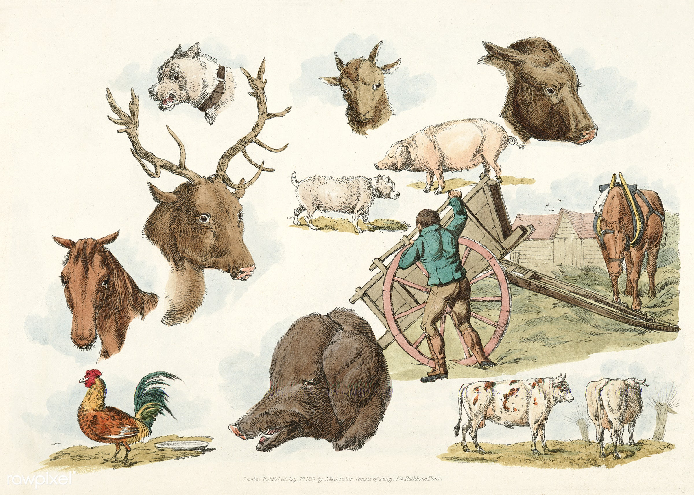 Illustration of heads of domestic and wild animals and full figure of a dog, pig, horse, cows and a cock; a working farmer...