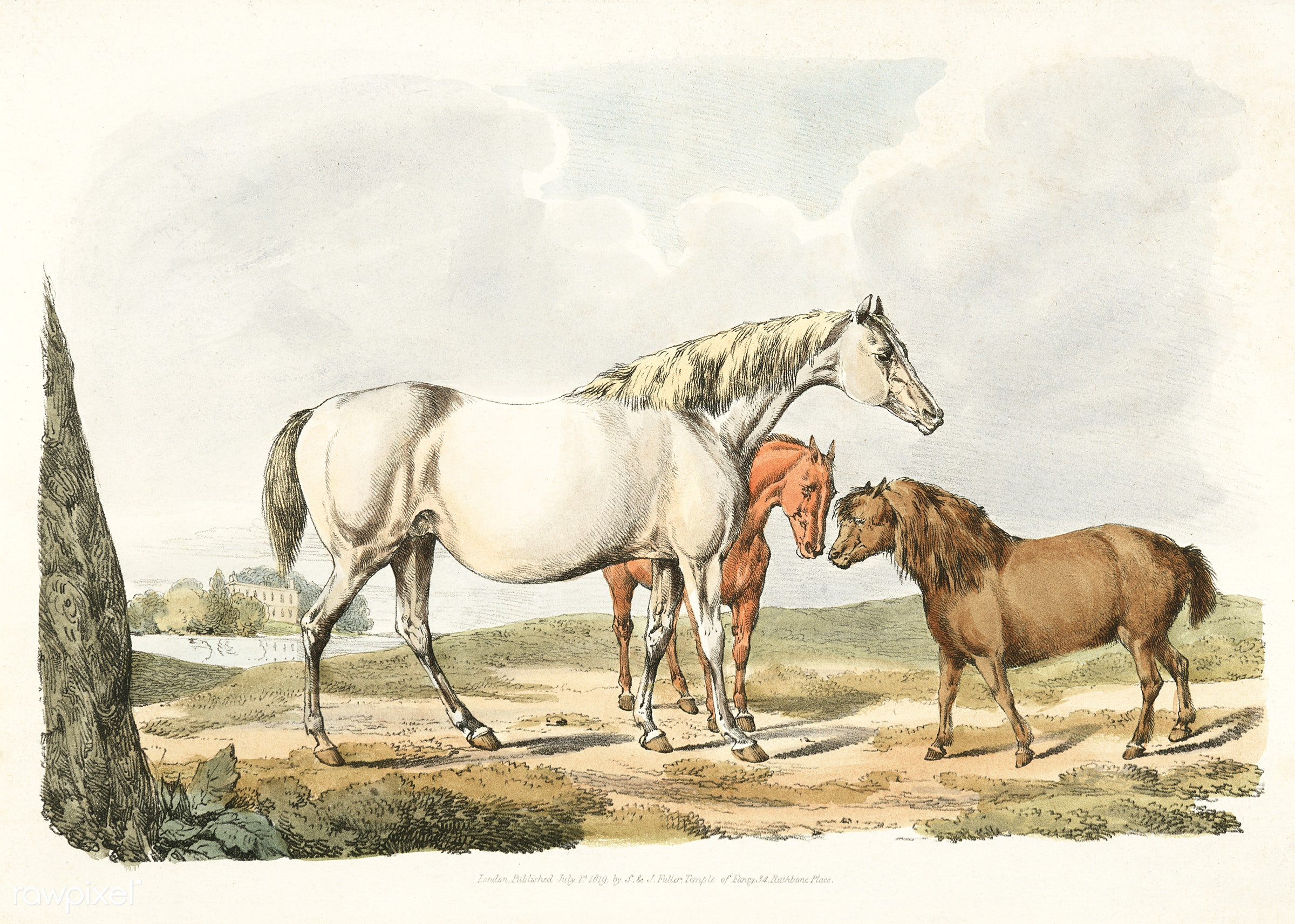 Illustration of two horses and a pony from Sporting Sketches (1817-1818) by Henry Alken (1784-1851). - animal, antique, cc0...