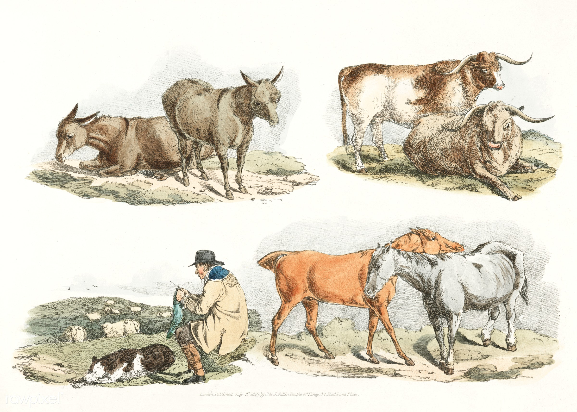 Illustration of knitting shepherd from Sporting Sketches (1817-1818) by Henry Alken (1784-1851). - animal, animals, antique...